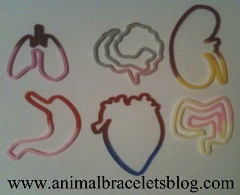 Buddy-bands-body-organs-shapes